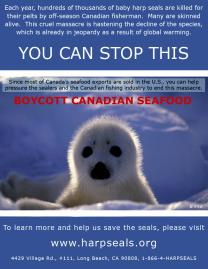 You Can Stop The Canadian Seal Hunt