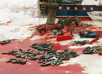 Seal Carcasses and Bloody Ice