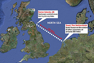 Map of grey seals' journey